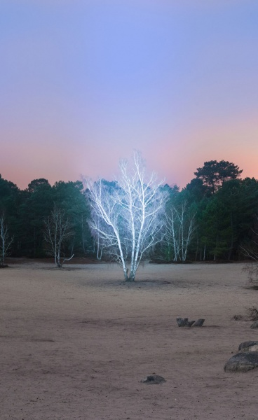 Marche Céleste: Alexis Pichot's Illuminating Immersion Into the Forest of Fontainebleau in France